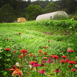 Old Mill Road Biofarm looks more like a postcard than a farm.