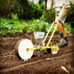 Kirsti of Old Mill Road Biofarm seeding like a boss