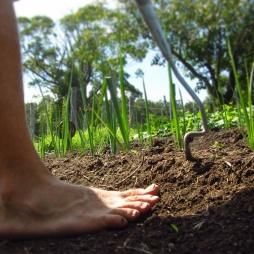 Barefoot weeding!