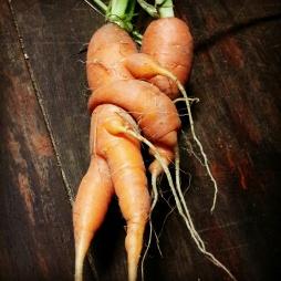 Frisky carrots