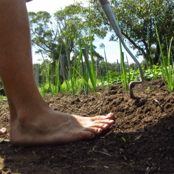 Barefoot weeding, bliss.