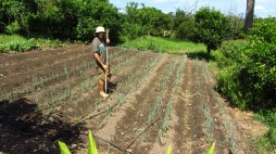 Barefoot weeding