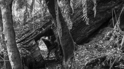 John standing under a fallen giant