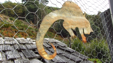 The possums are hardcore in Tassie, all gardens need to be fully surrounded with special 'floppy' possum proof fencing