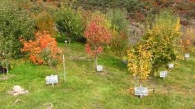 Sassafras orchard