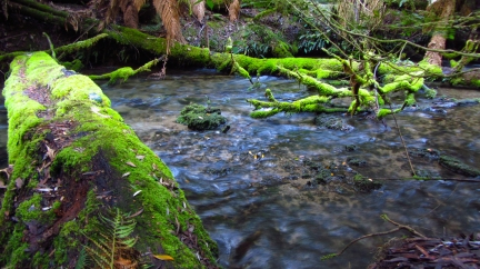 Some of the amazing fresh springfed creeks in the National Park